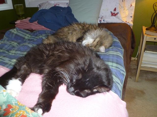Content Cats and Fevre Dreams