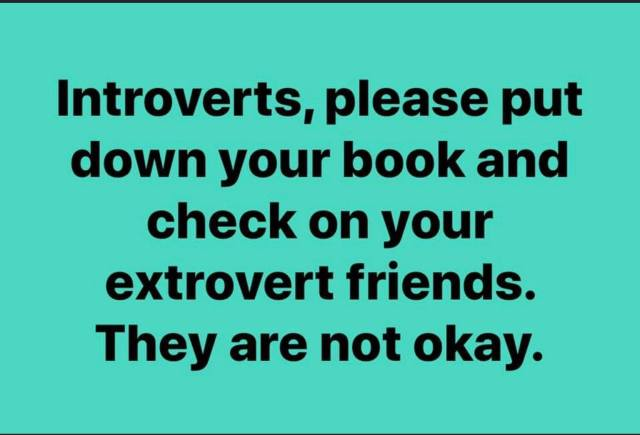 introverts please